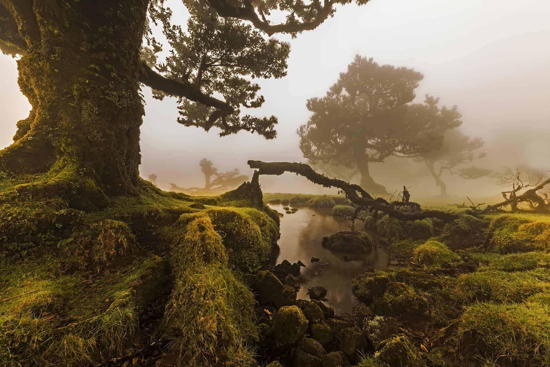 Vereda do Fanal Madeira